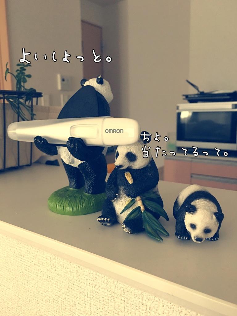 我が家のパンダさん