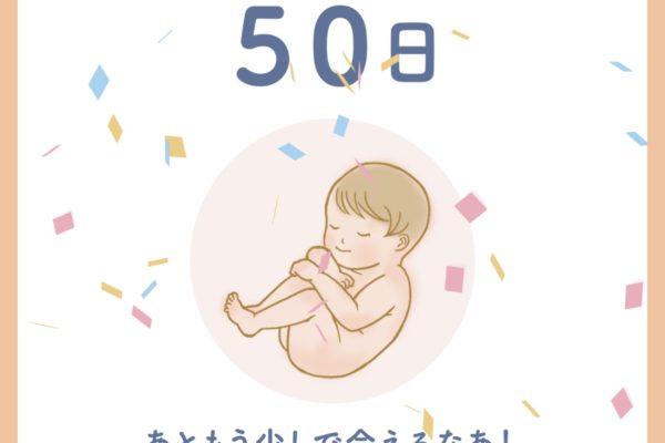 予定日まであと「50日」!